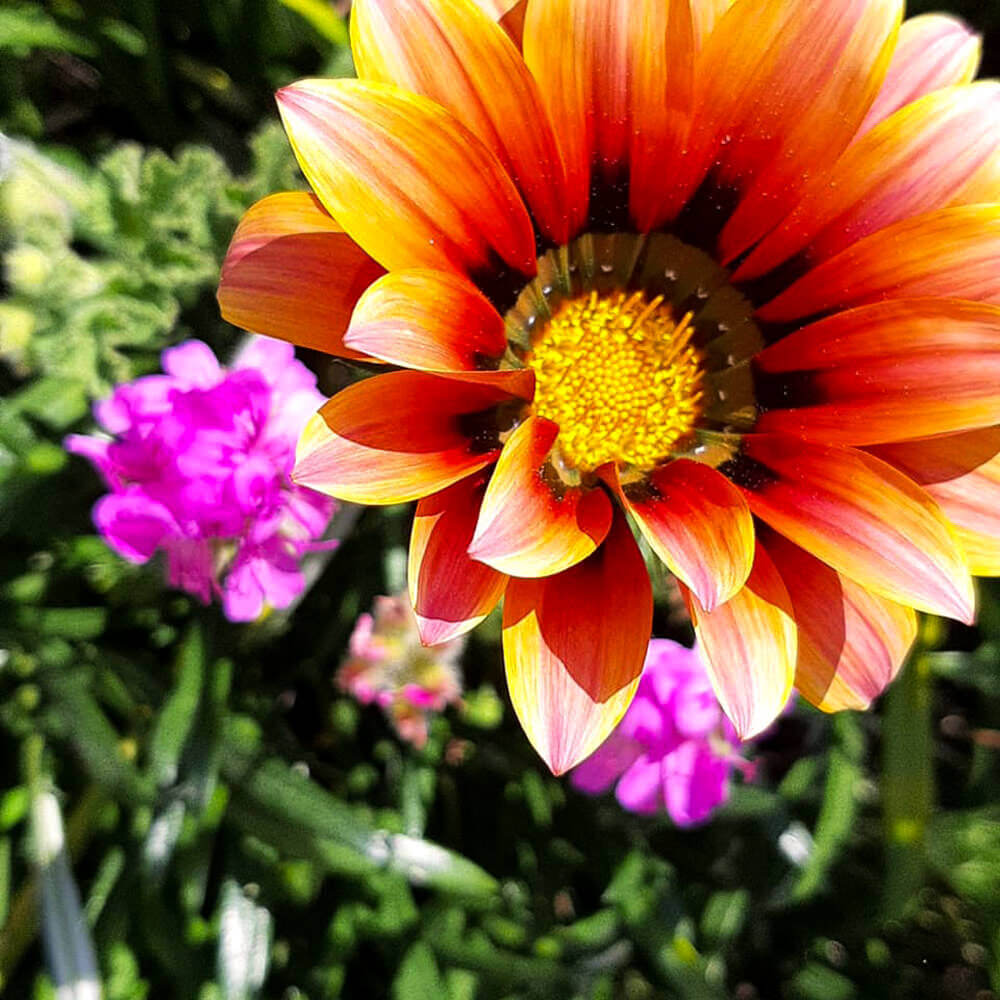 In our garden you will feel the fragrance and color of several flowers