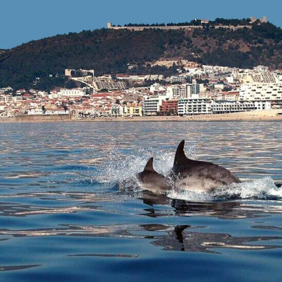 Dolphins passing by in the bay of Sesimbra, Portugal
