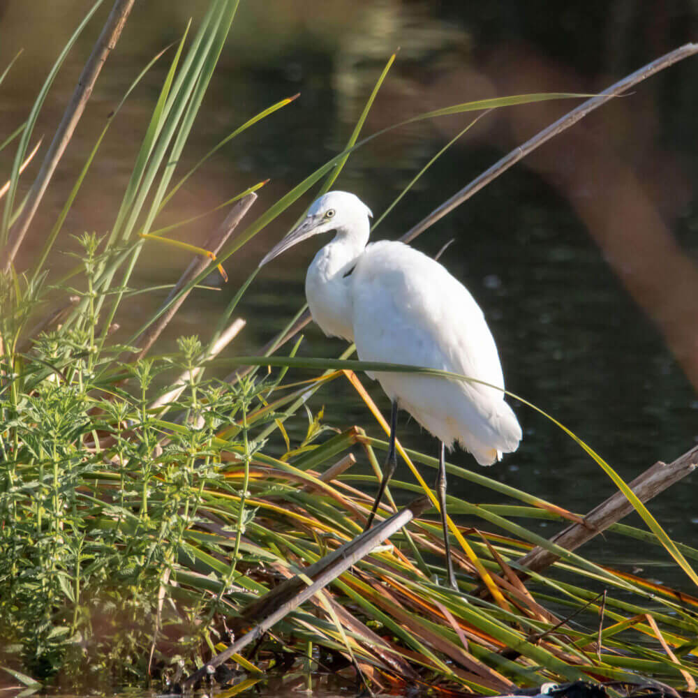 Bird watching in the protected area of Lagoa de Albufeira